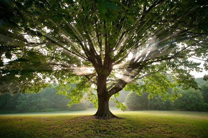 Zašto se za porodicu vezuju pojmovi koji se koriste i za biljni svet – koren, rod,loza,stablo?