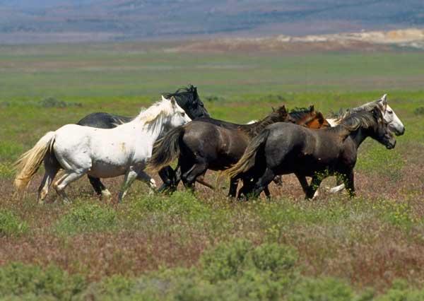 Zašto su  konji plašljivi?